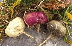 Ges ndeste vegetarisch organisch maca kapseln kombination - Steigerung testosteronspiegel ...